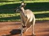Australien 2006-032