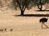 Namibia-008